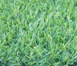 Plush Synthetic Grass (premium grass) – 2m(W) x 10m(L)